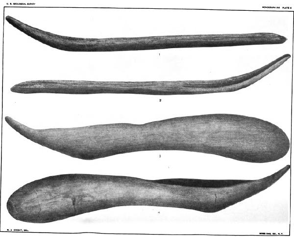 Newberry1889-Agassizi-Clarki